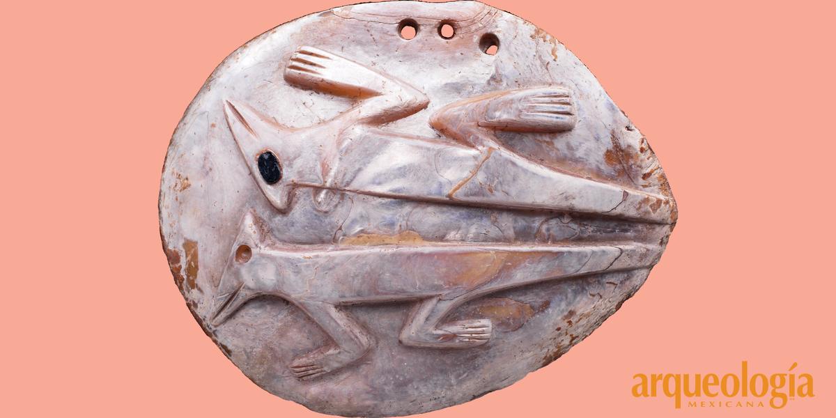 Origen y circulación de las conchas de moluscos