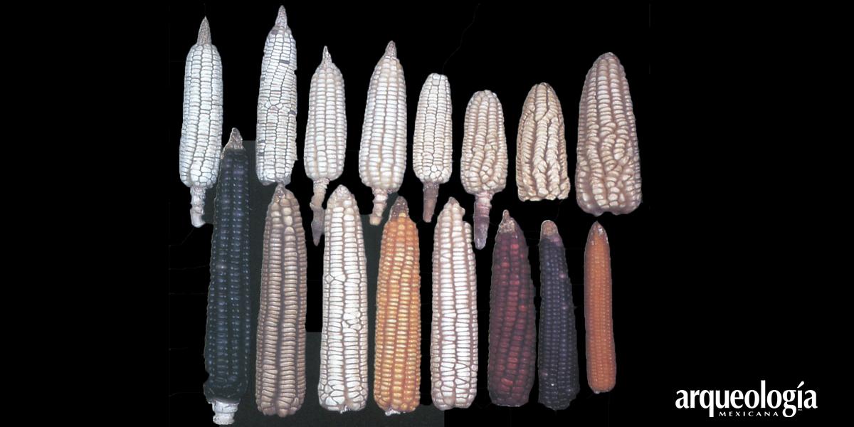 El maíz mexicano