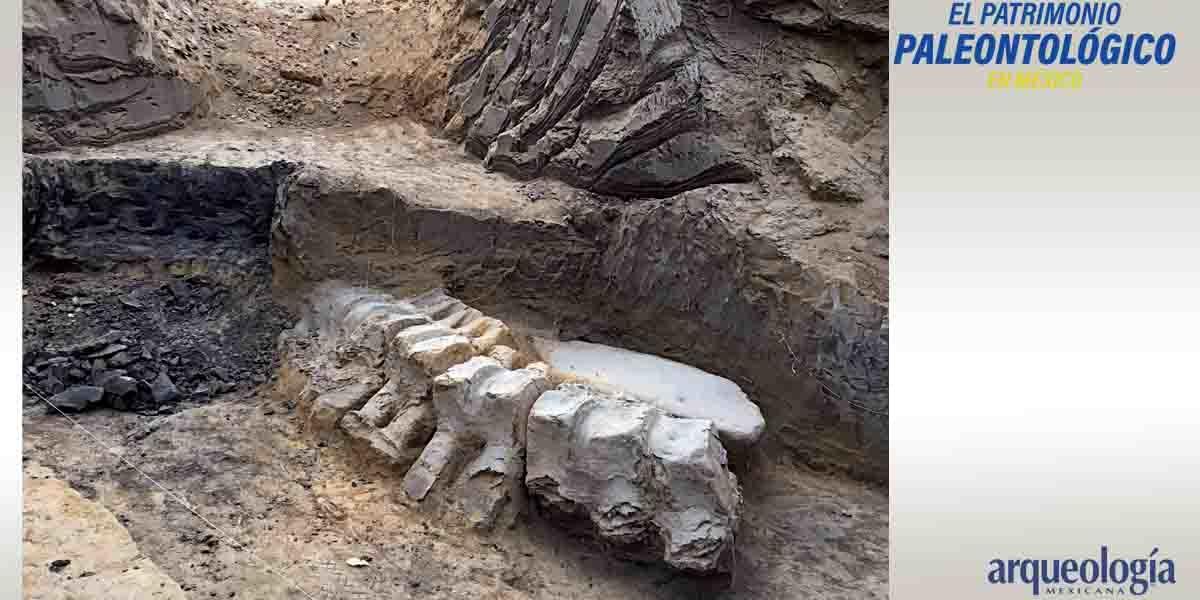Los restos fósiles en el imaginario