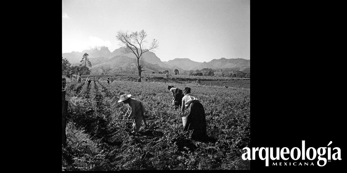 El cultivo mesoamericano