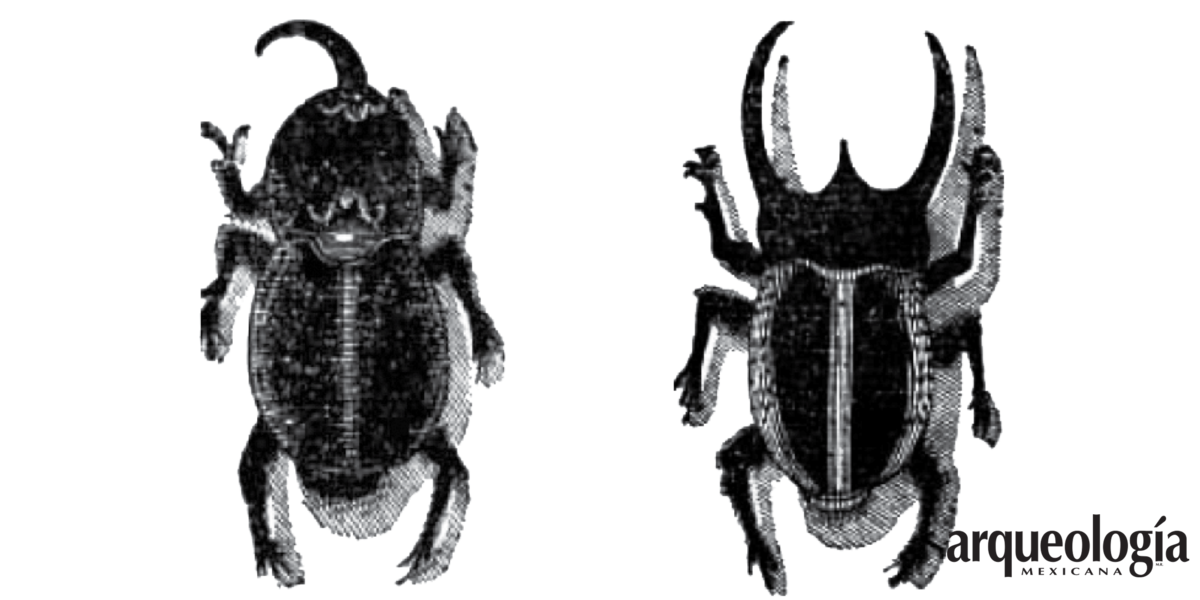 Escarabajos