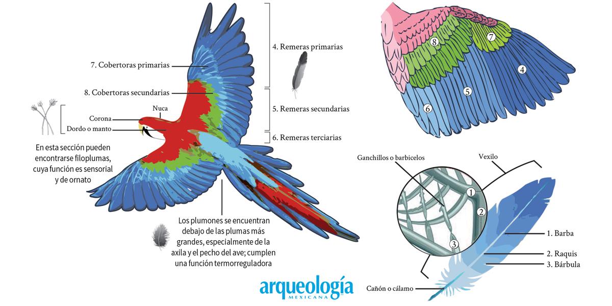 De la pluma y sus usos en Mesoamérica