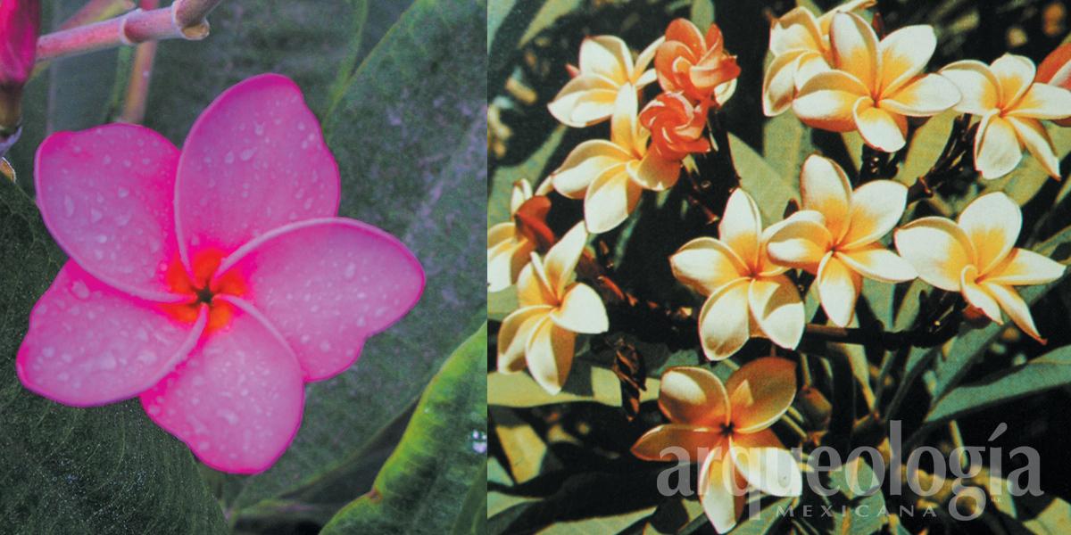 Flores, ritual y dioses entre los mexicas