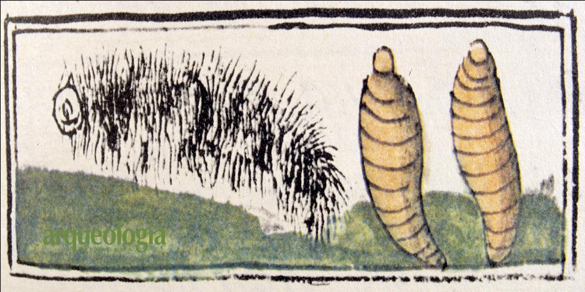 Los insectos comestibles