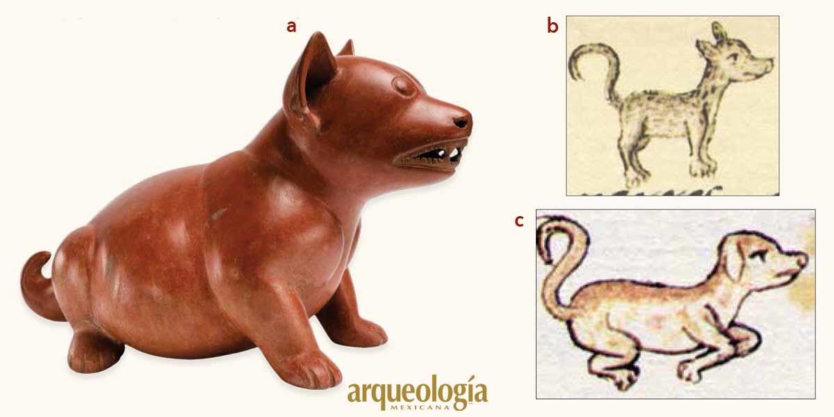 Ancestros de los perros