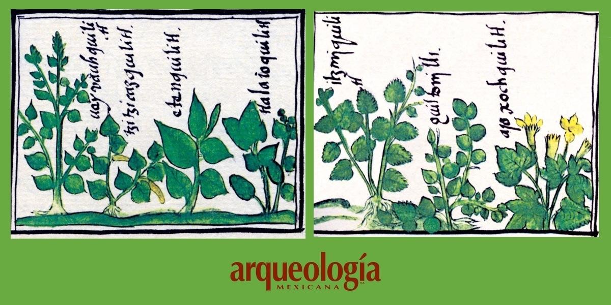 Clasificación del amaranto