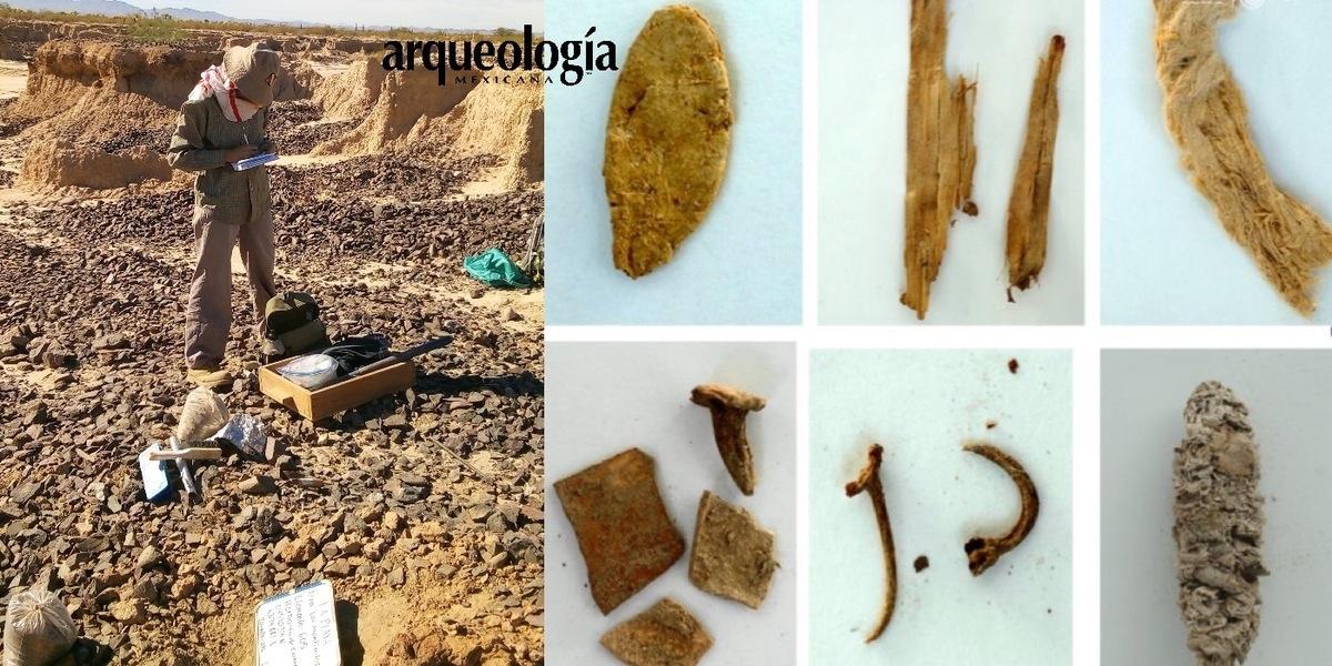 El resto de maíz más antiguo encontrado hasta la fecha en el noroeste de México, emergió en bandejas de agua