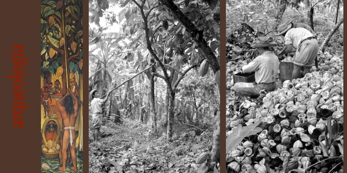 Origen, domesticación y uso del cacao