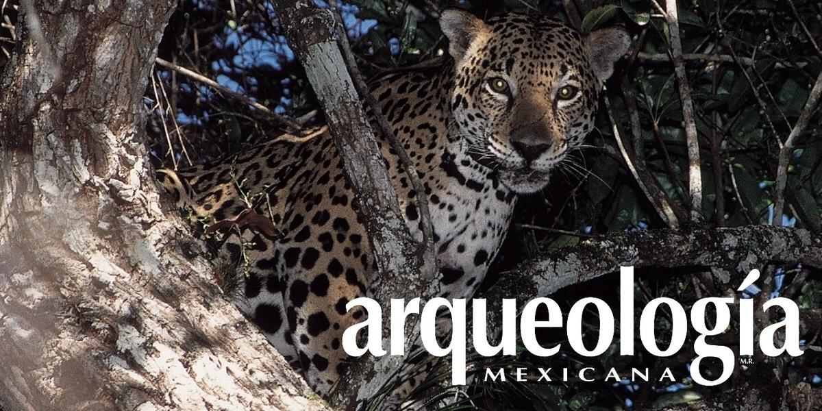El jaguar: espíritu de lo silvestre