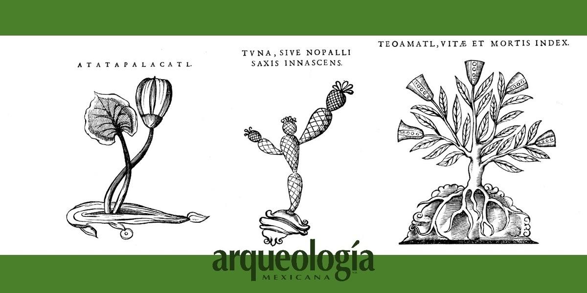 Las ilustraciones en la obra de Francisco Hernández (1572-1576)