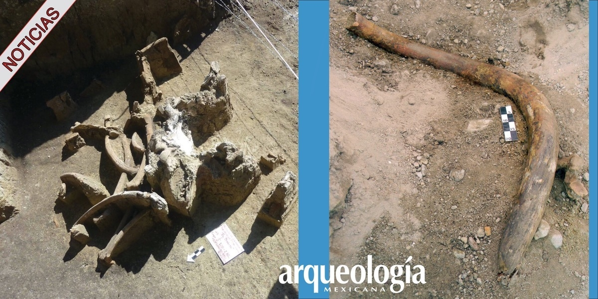 Rescatan restos de fauna de la era del hielo en Atotonilco de Tula, Hidalgo