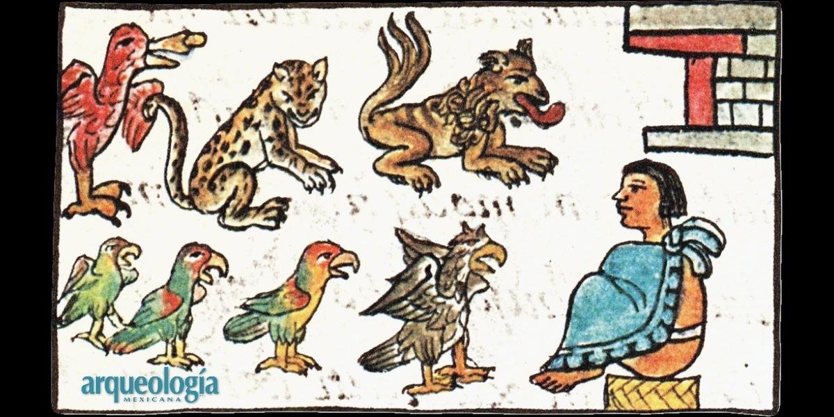 Los animales del rey. El vivario en el corazón de Tenochtitlan
