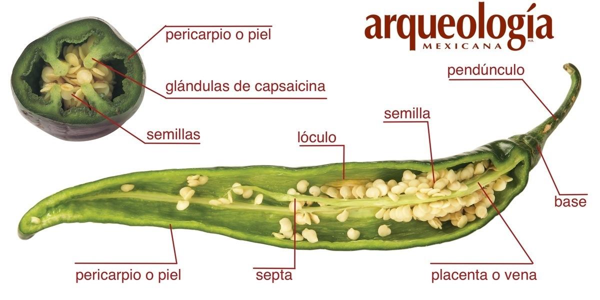 Las causas del picor y el sabor del chile