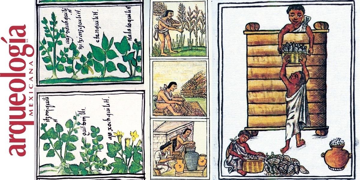 Los cuerpos divinos. El amaranto: comida ritual y cotidiana