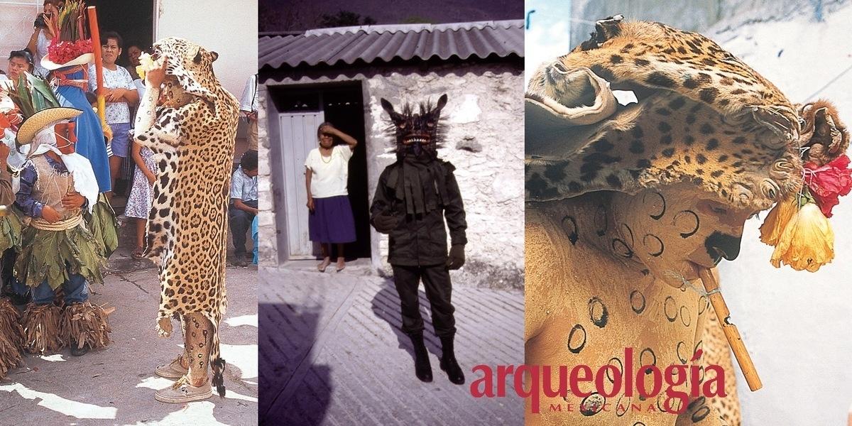 Tigres, tigrillos, leones y tecuanes