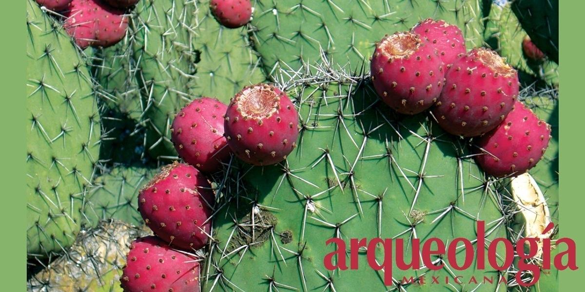 Flora que ha aportado México al mundo