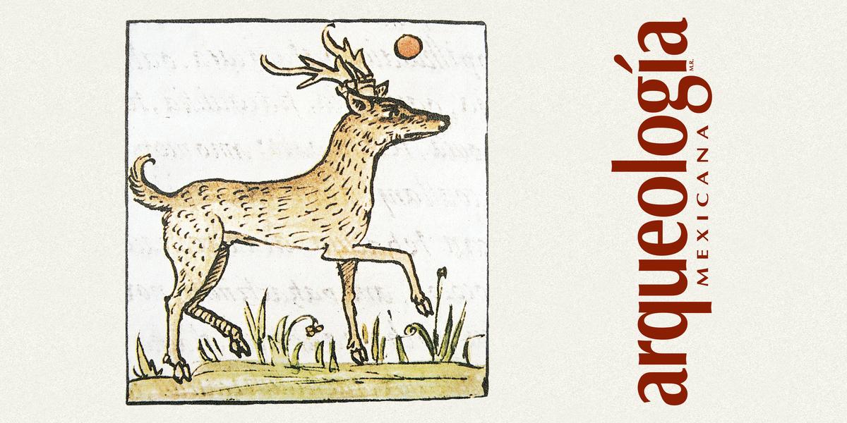 El uso de algunas plantas y animales en el pasado y el presente
