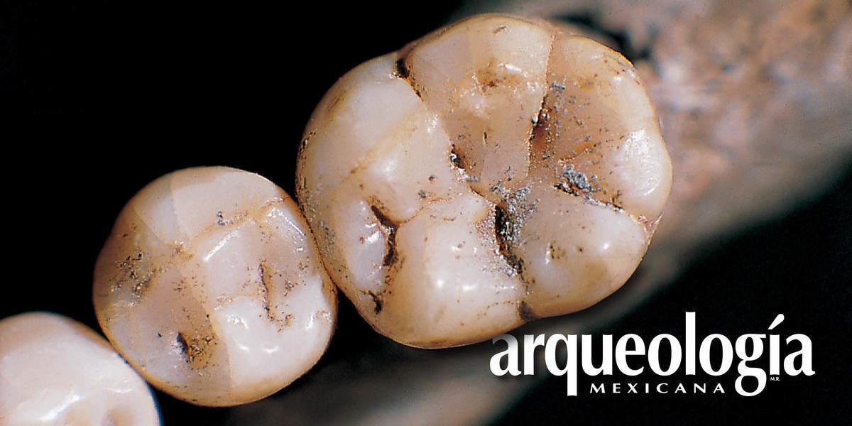 Estudio antropológico de la evolución de los dientes