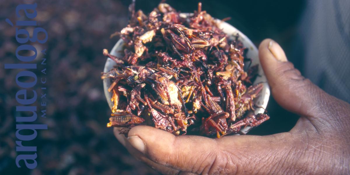Insectos comestibles en oaxaca