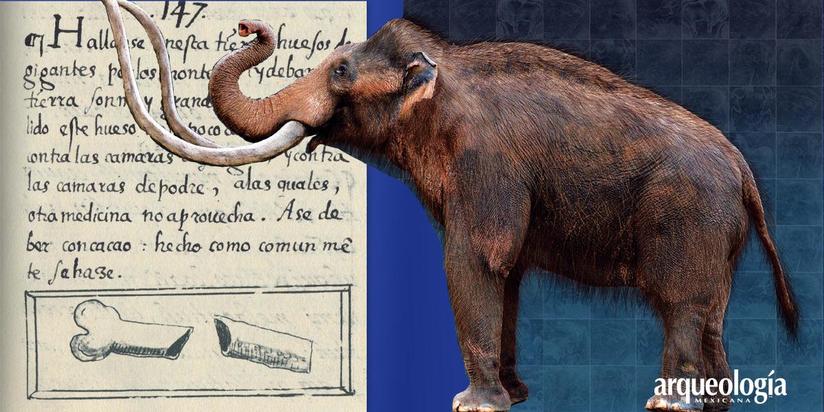 Remedio: hueso de mamut molido