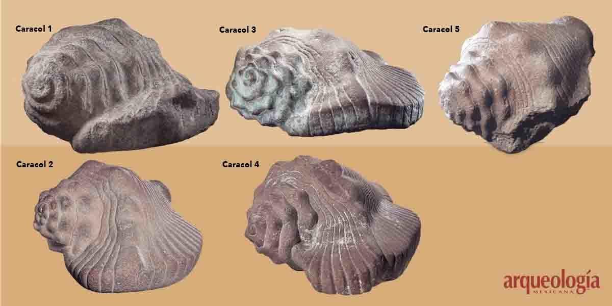 Caracoles monumentales y su materia prima