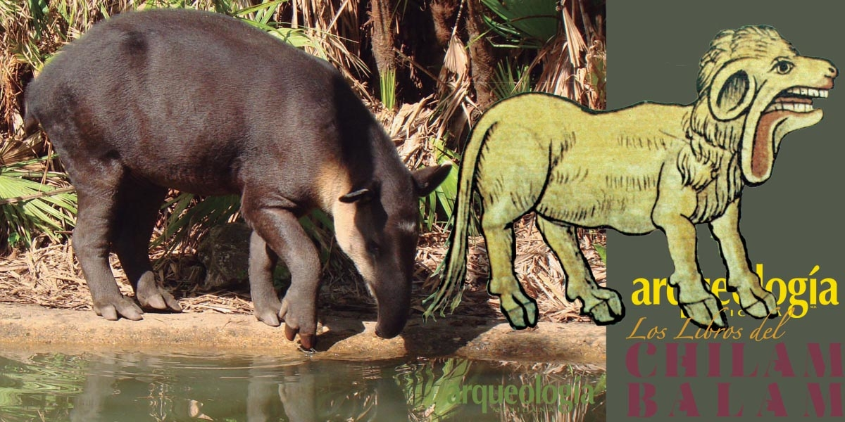 El tapir o danta