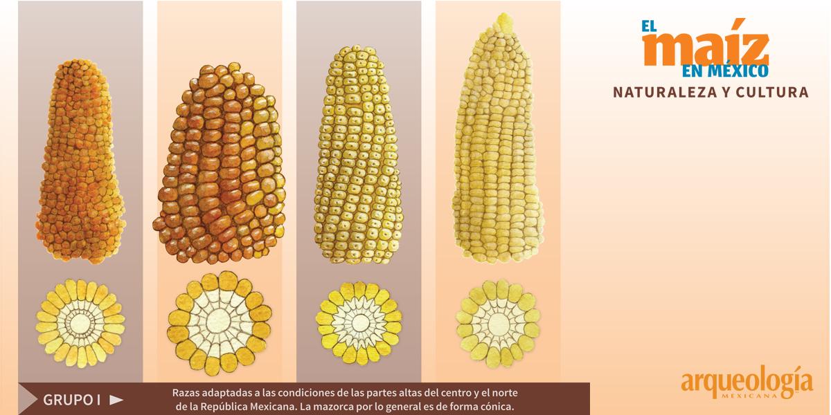 Razas de maíz mexicano