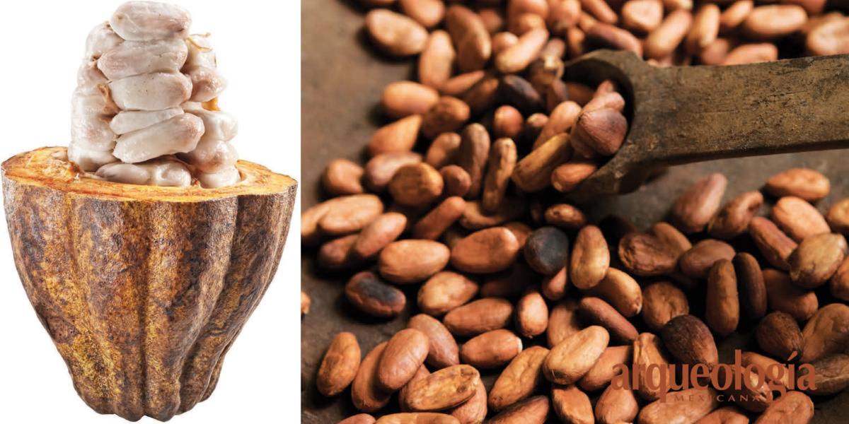 Distribución y tipos de cacao
