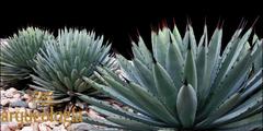 Flora y cultura en una fosa tectónica