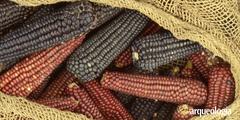 Plantas mexicanas en Europa en el siglo XVI