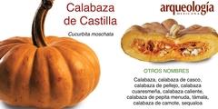 Las especies de calabaza de México