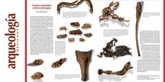 El registro arqueológico e histórico del maguey