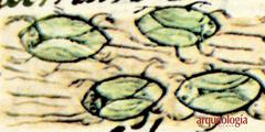 Insectos lacustres