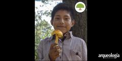 Los hongos silvestres de Tlaxcala