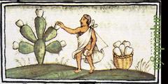 Nopal (Opuntia)