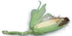 La nixtamalización del maíz