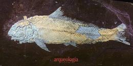 Dos peces de la Cantera Tlayúa