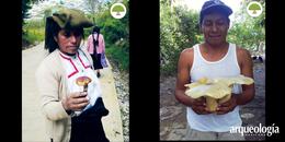 Micofilia y micofobia, del amor al odio por los hongos