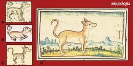 Tipos de perros en Mesoamérica
