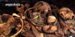 Cabeza momificada de guacamaya hallada en cueva Avendaños, Chihuahua, con 2000 años de antigüedad.
