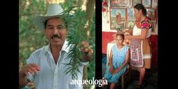 Los curanderos y la flora medicinal de Hidalgo