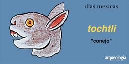 tochtli (conejo)