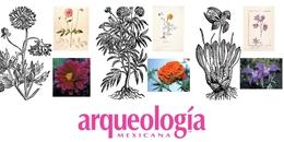 """Las plantas ornamentales en la obra deFrancisco Hernández. """"El preguntador del rey"""""""