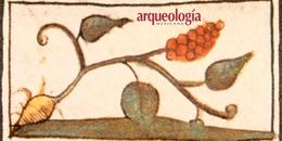 Plantas medicinales del México prehispánico