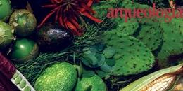 Recursos para la alimentación aportados por México al mundo