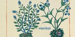 Libellus de Medicinalibus Indorum Herbis (Librito de las yerbas medicinales de los indios) o Códice Badiano