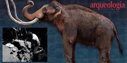 La fauna del Pleistoceno en Azcapotzalco. Evidencias y reflexión