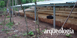 Nuevos hallazgos en la región Puuc. Sabana Piletas y su escalinata jeroglífica