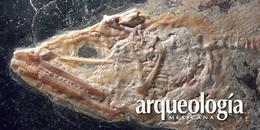 La Cantera de Tlayúa. Un sitio paleontológico extraordinario