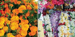 Dos flores mexicanas